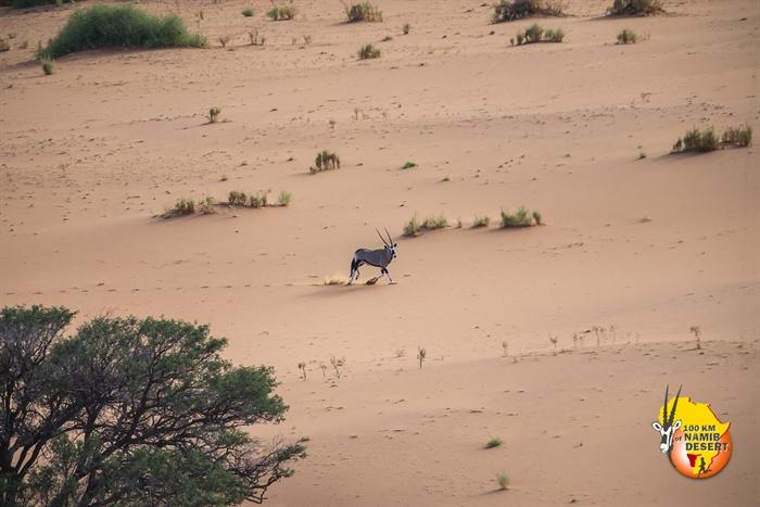 Foto galería 100km of Namib Desert-2019